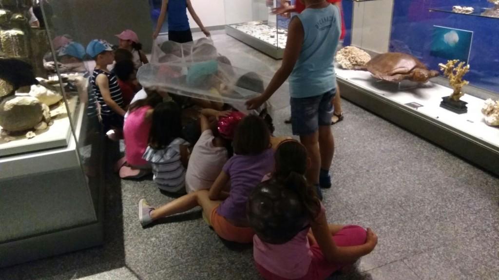 museo ciencias 11
