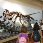 museo ciencias 14