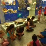 museo ciencias 8